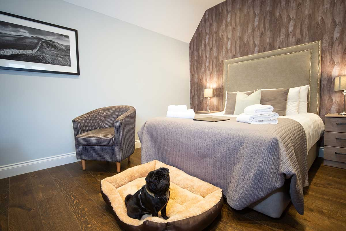 Room 10 bedroom - A photo of the bedroom, showing a double bed, and armchair on the left side and a black small dog sitting on a dog bed and the front of the bed